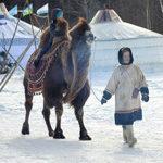 катание на верблюде зоопарк кочевник