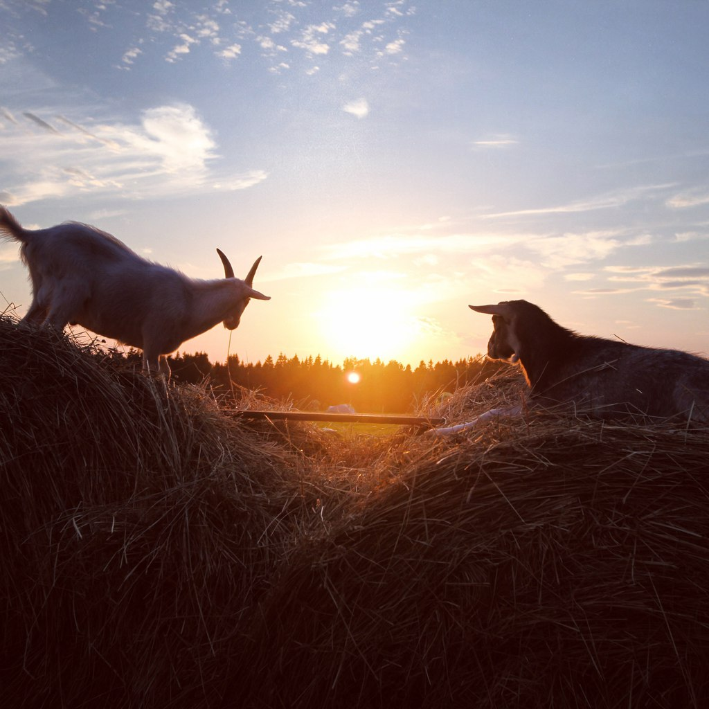 козы в москве